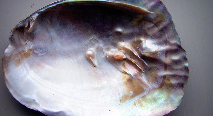 parel-oester