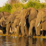 Op safari met Jambo