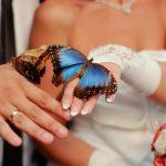 Trouwen… vlinders in de buik en in de lucht