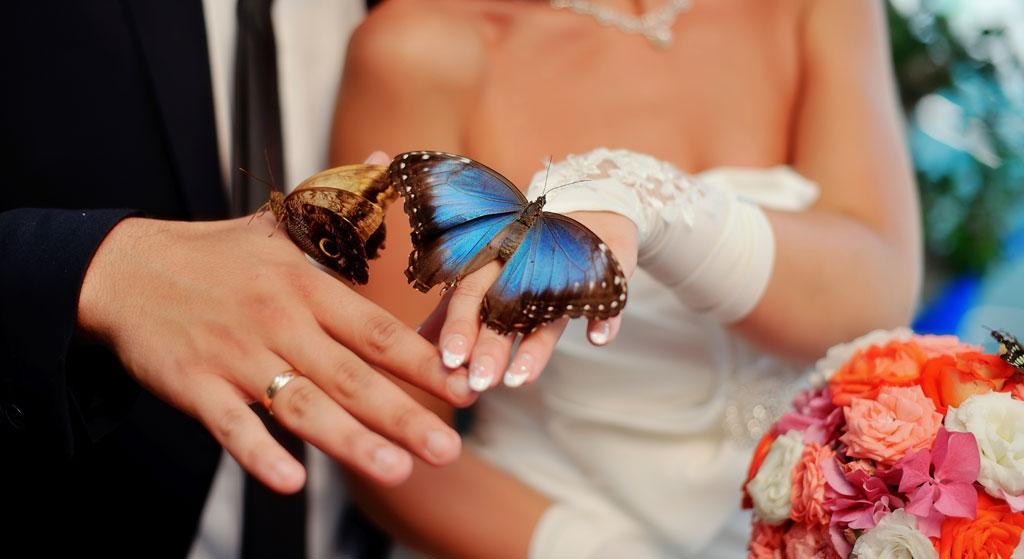 trouwen-vlinders