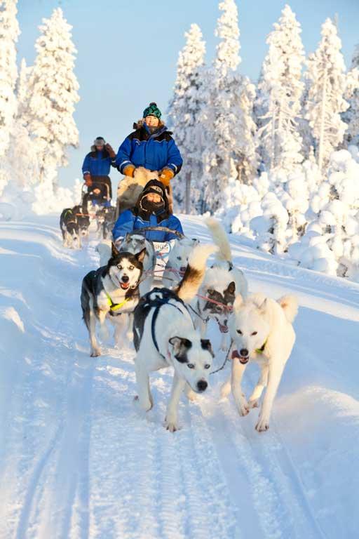 husky-sleigh